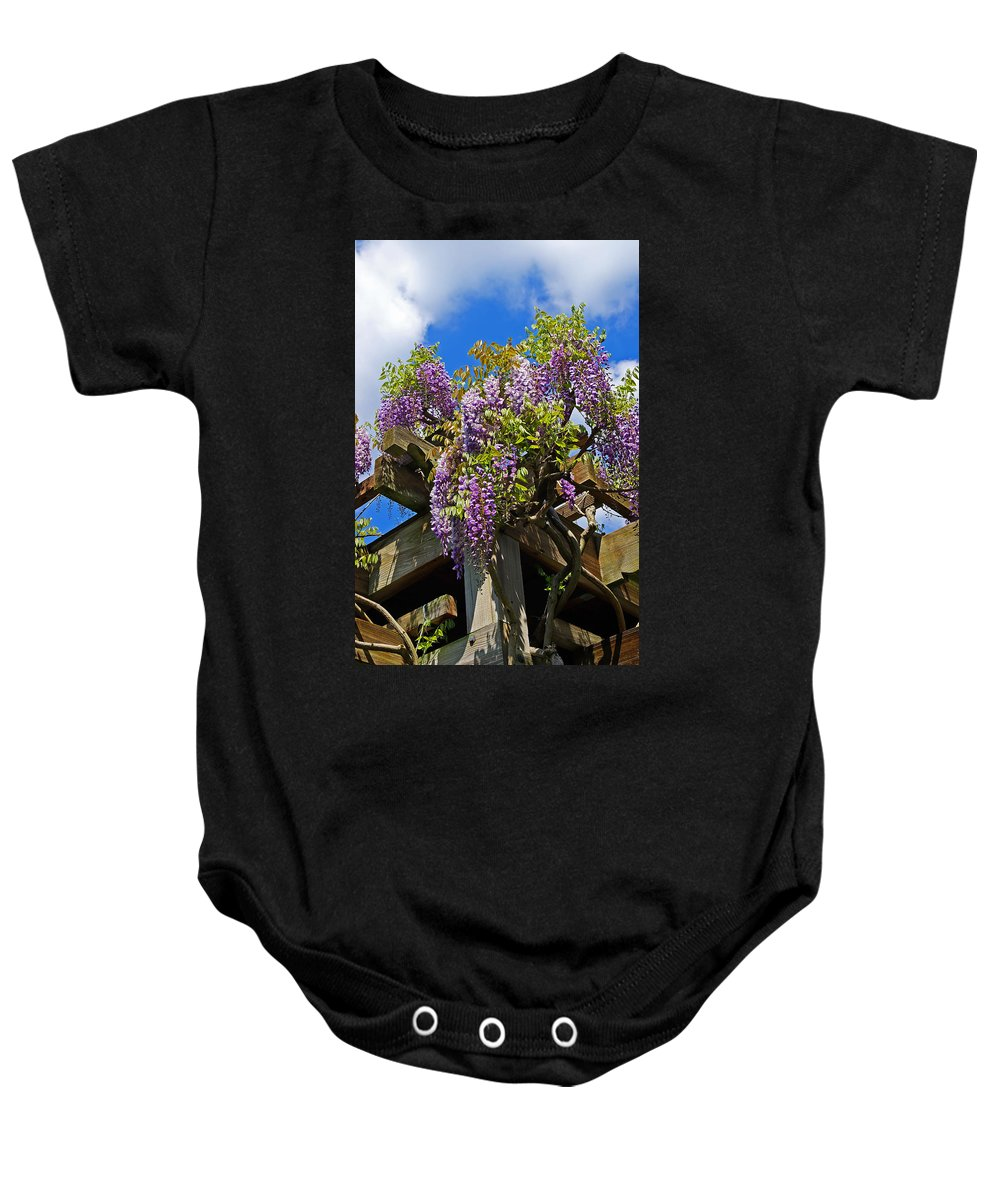 Japanese Wisteria Baby Onesie featuring the photograph Japanese Wisteria On Trellis by Rich Walter