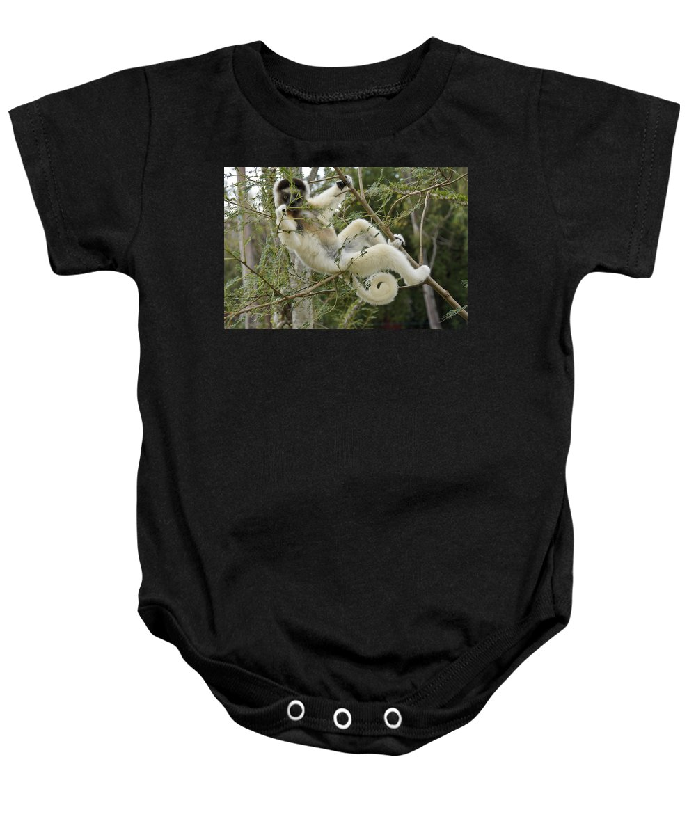 Africa Baby Onesie featuring the photograph Just Hanging Out by Michele Burgess
