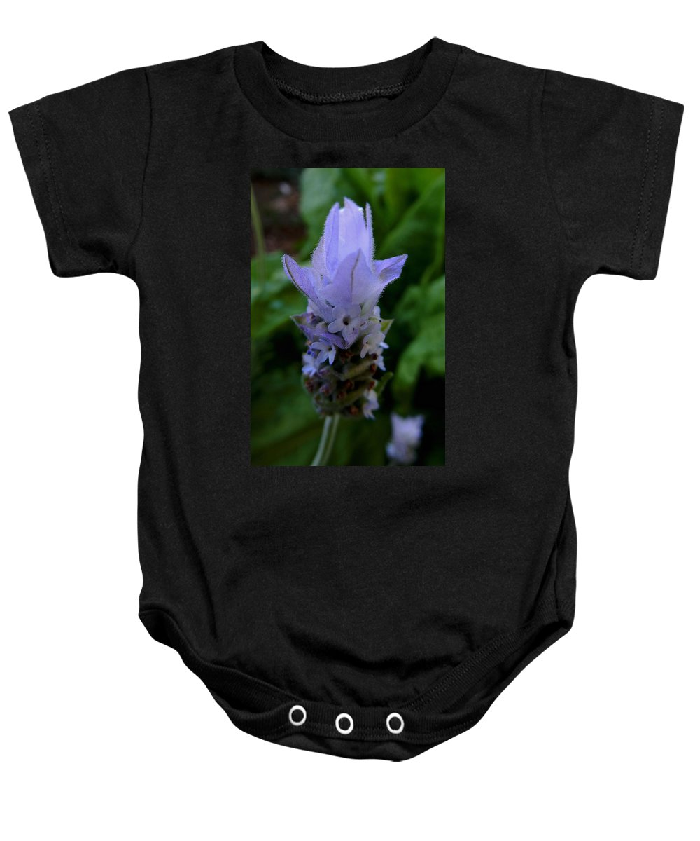 Lavender Baby Onesie featuring the photograph Lavender by Pamela Walton