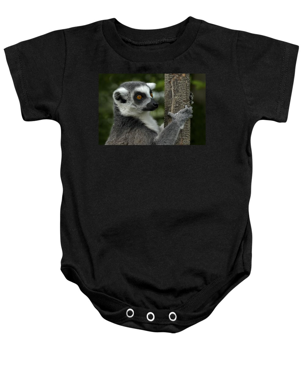 Africa Baby Onesie featuring the photograph Lemur by TouTouke A Y