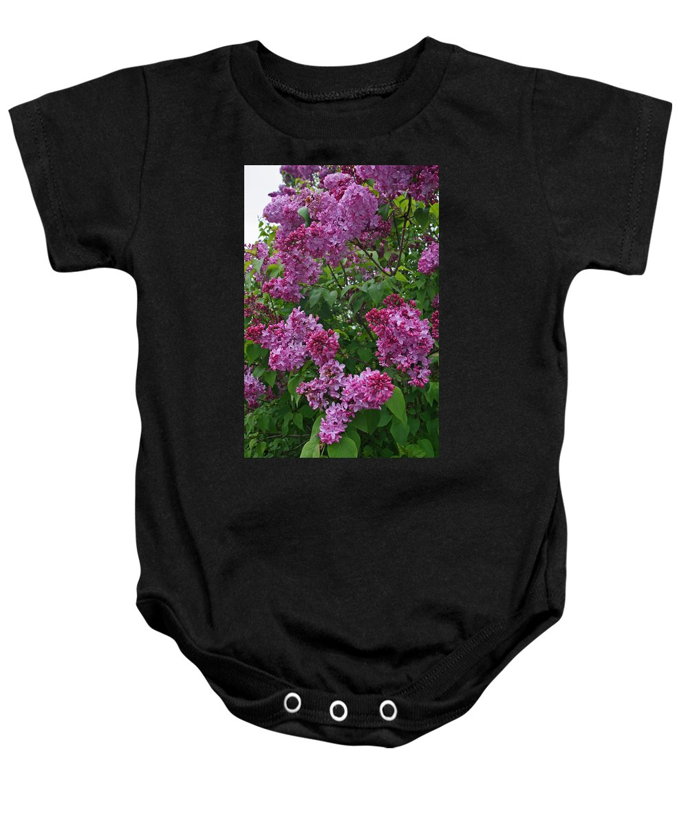 Lilac Baby Onesie featuring the photograph Lilacs At Hulda Klager Lilac Garden by Elizabeth Rose
