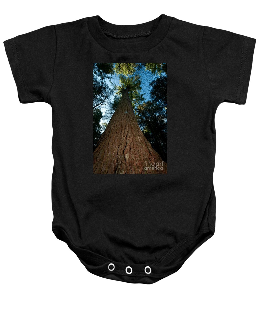 Family Pinaceae (pine Family) Baby Onesie featuring the photograph Methuselah by JG Coleman