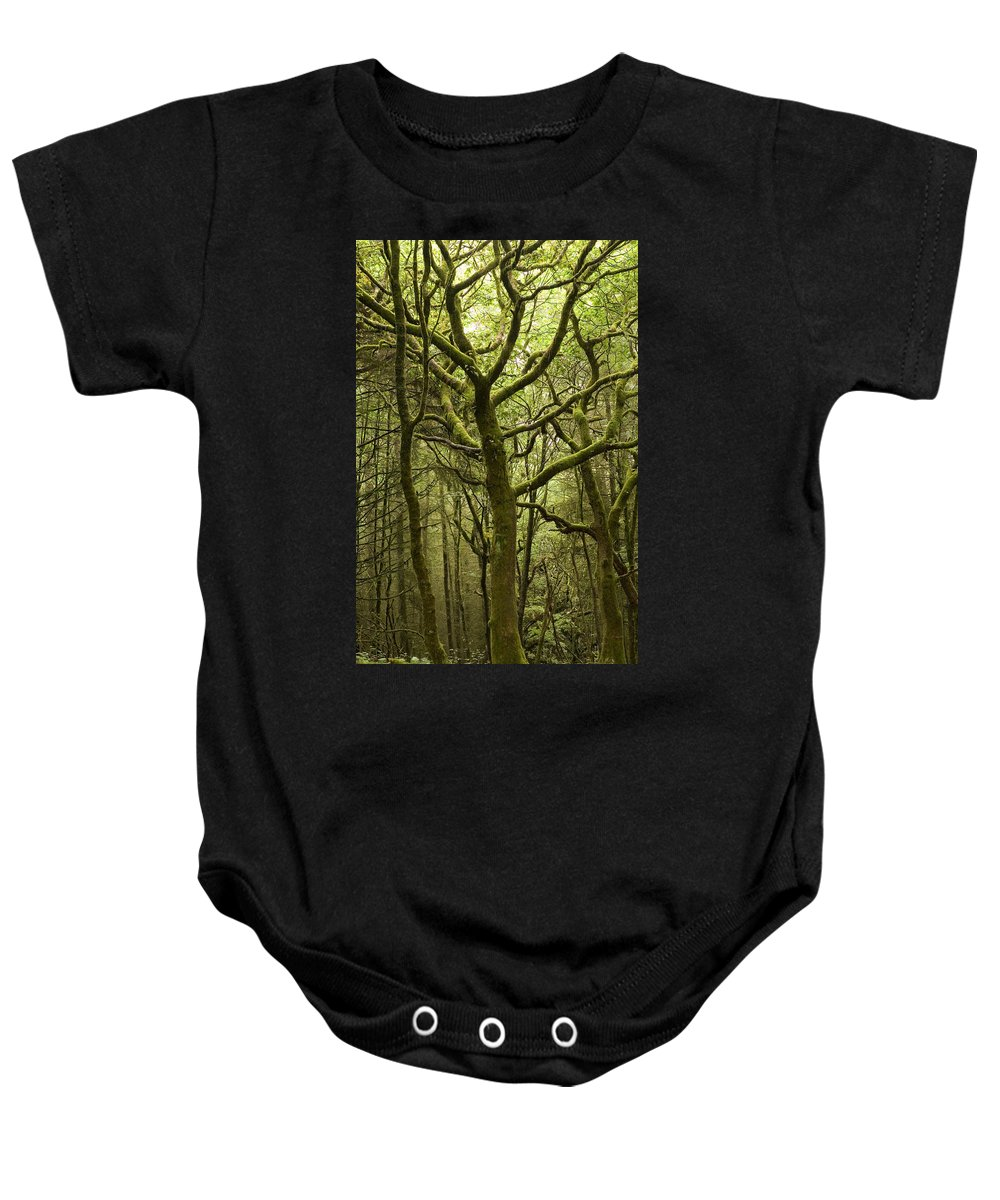 Forest Baby Onesie featuring the photograph Mossy Welsh Forest by Jeremy Voisey
