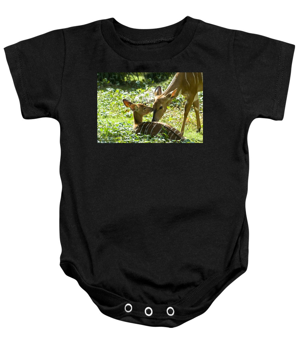 Deer Baby Onesie featuring the photograph Motherly Love by Anthony Sacco