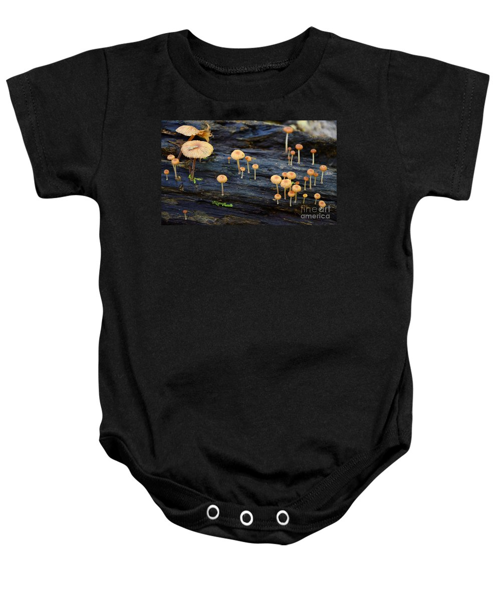 Mushrooms Baby Onesie featuring the photograph Mushrooms Amazon Jungle Brazil 4 by Bob Christopher
