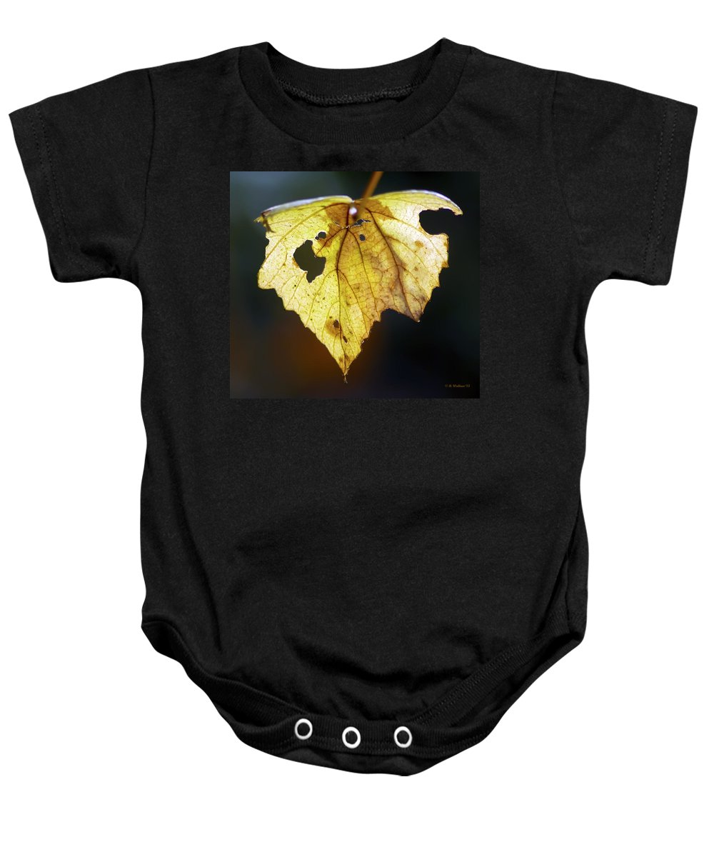 2d Baby Onesie featuring the photograph Nature Recycles by Brian Wallace