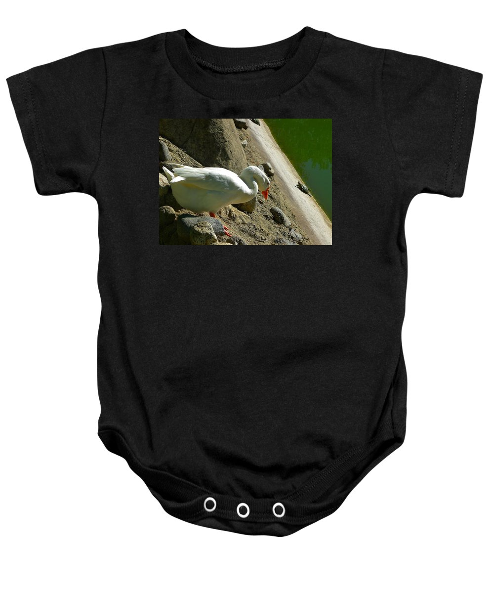Snow Goose Baby Onesie featuring the photograph Negotiating A Vertical Walk by Denise Mazzocco