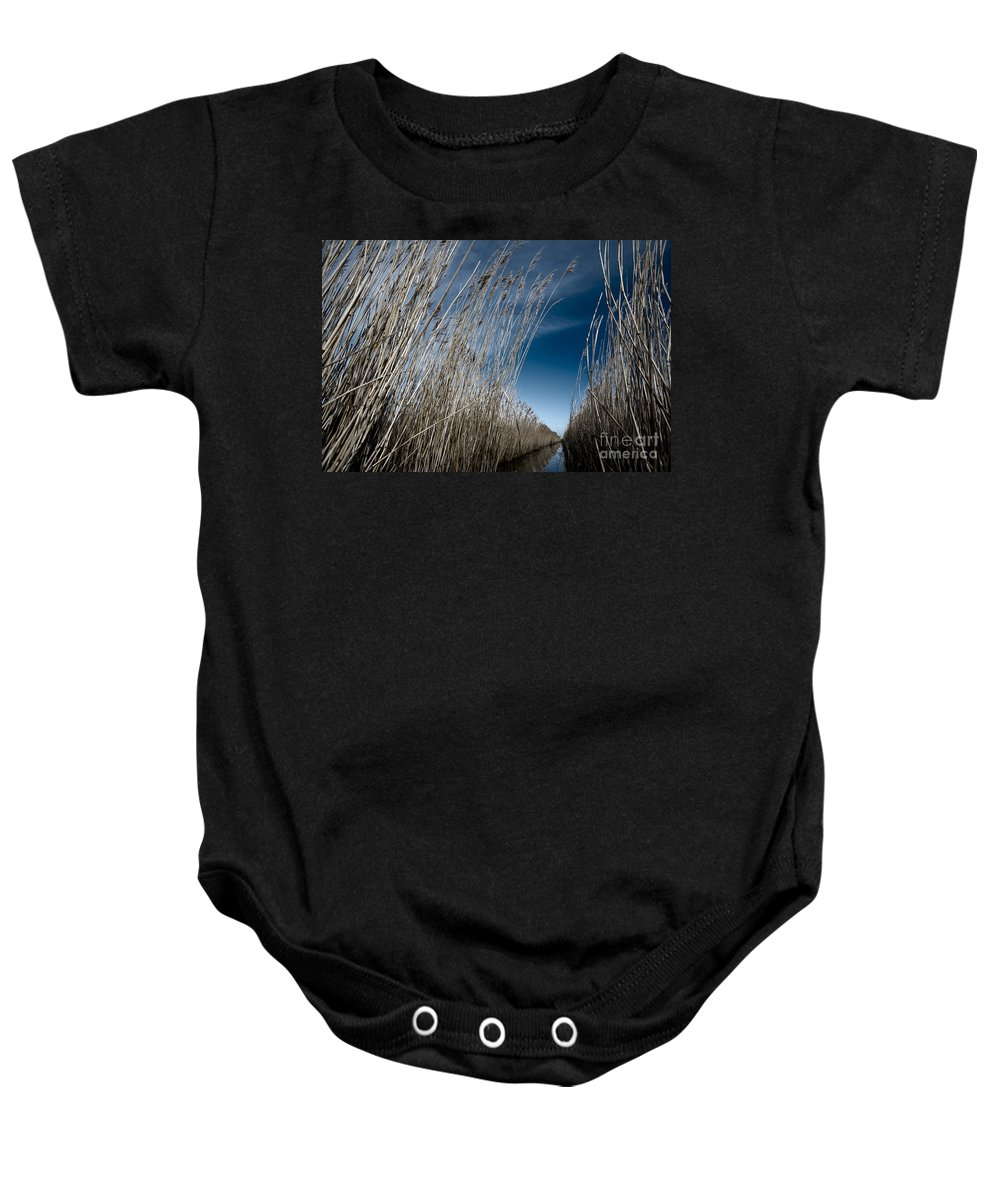 Norfolk Baby Onesie featuring the photograph Norfolk Reeds by Julian Eales
