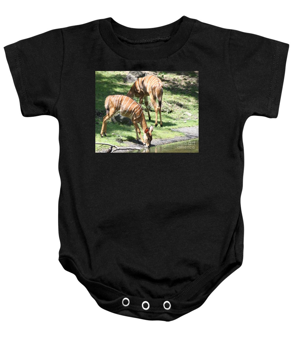 Nyalas At The Watering Hole Baby Onesie featuring the photograph Nyalas At The Watering Hole by John Telfer