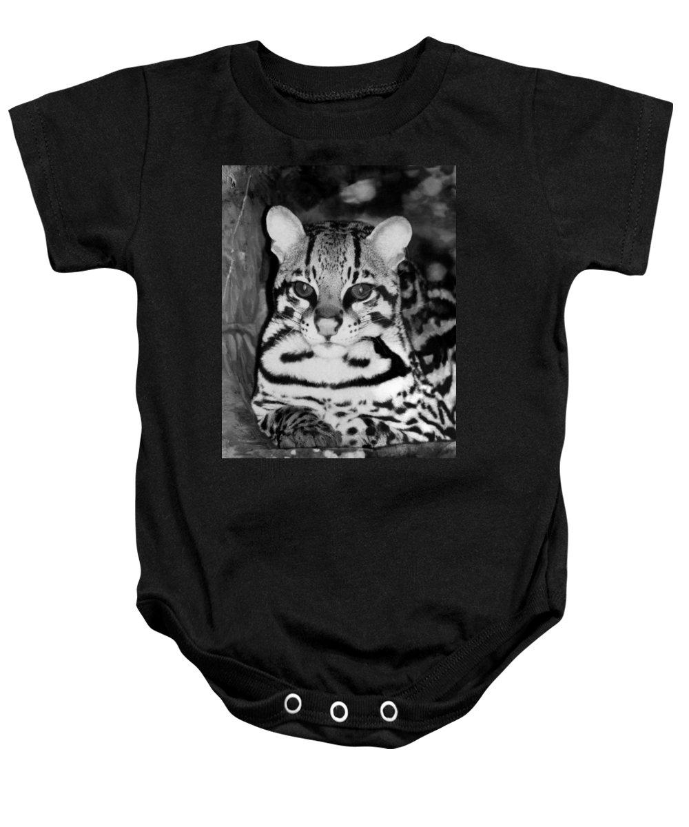 Ocelot In Repose Baby Onesie featuring the photograph Ocelot In Repose by Ellen Henneke
