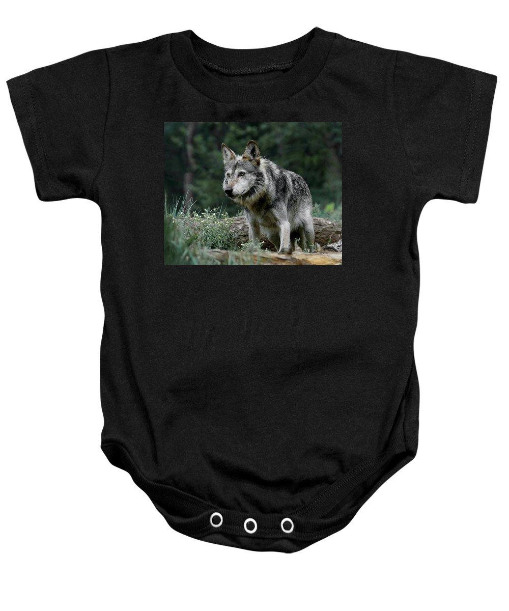 Wolf Baby Onesie featuring the photograph On Alert by Ernie Echols