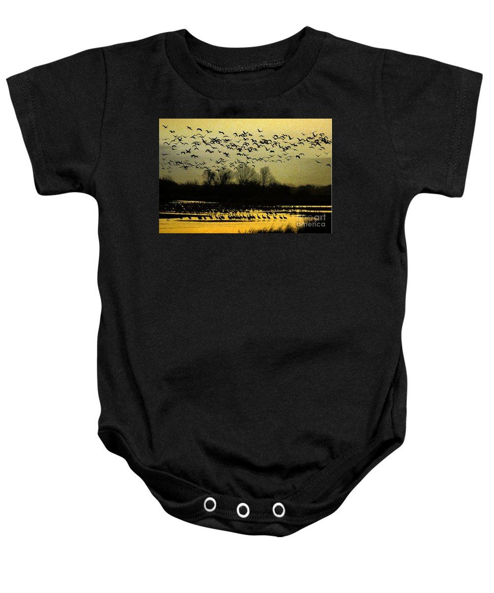 Sandhill Cranes Baby Onesie featuring the photograph On Golden Pond by Elizabeth Winter