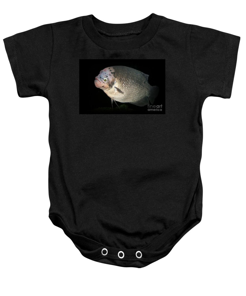 Giant Gourami Baby Onesie featuring the photograph One Strange Fish by Sara Raber