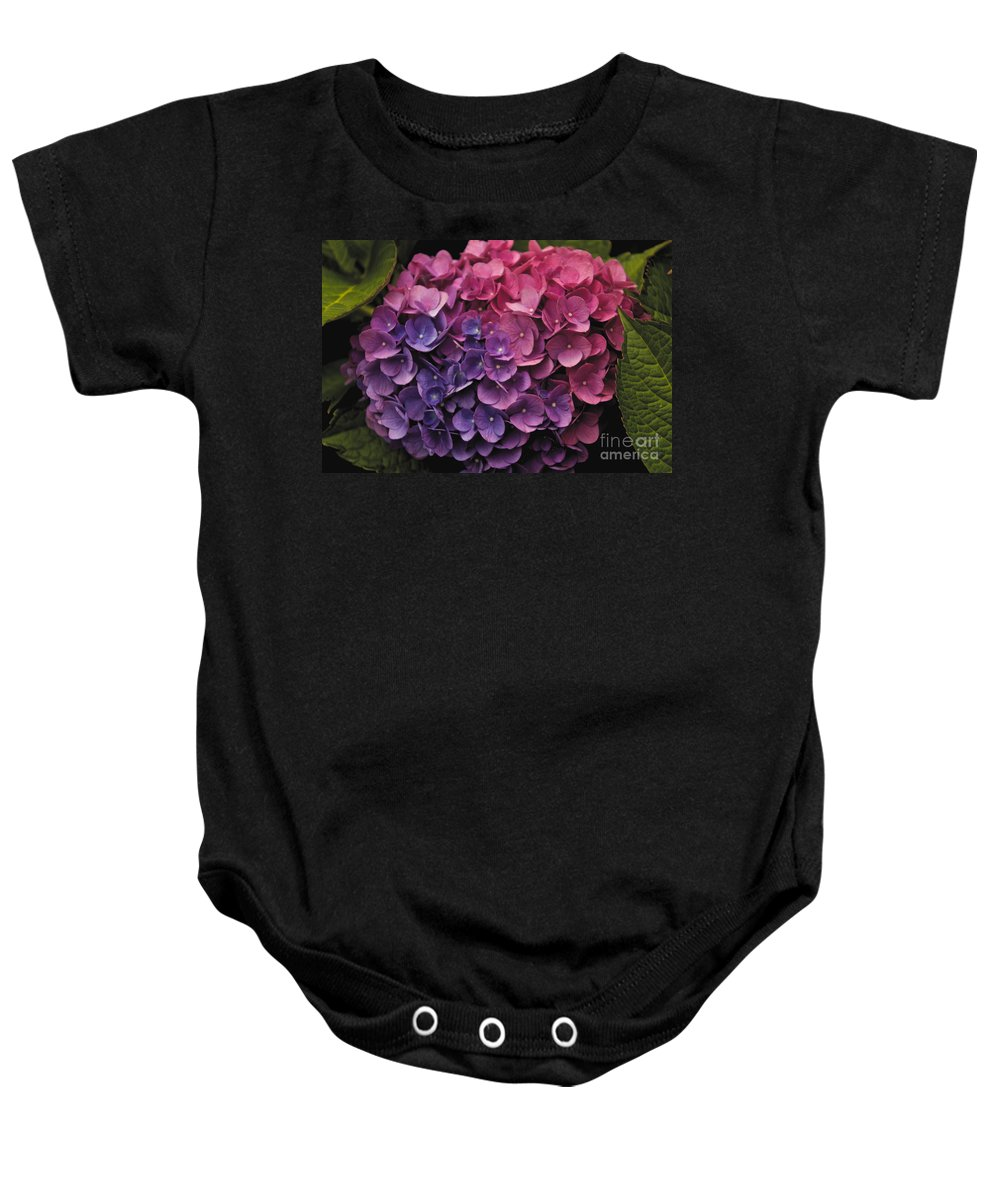 Flower Baby Onesie featuring the photograph Pink And Blue Hydrangea by William Norton
