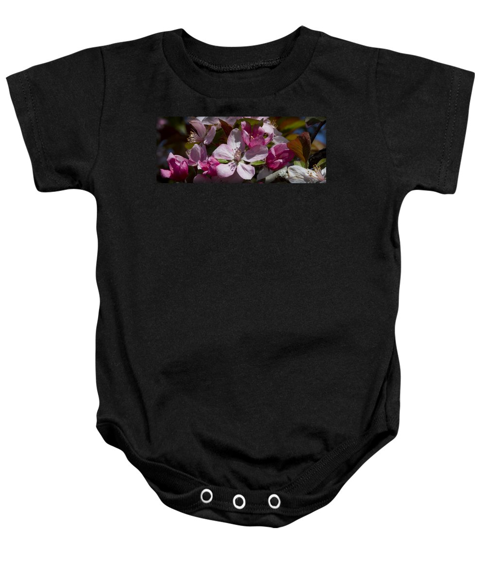 Malus Baby Onesie featuring the photograph Pink And Pretty by Kathy Clark