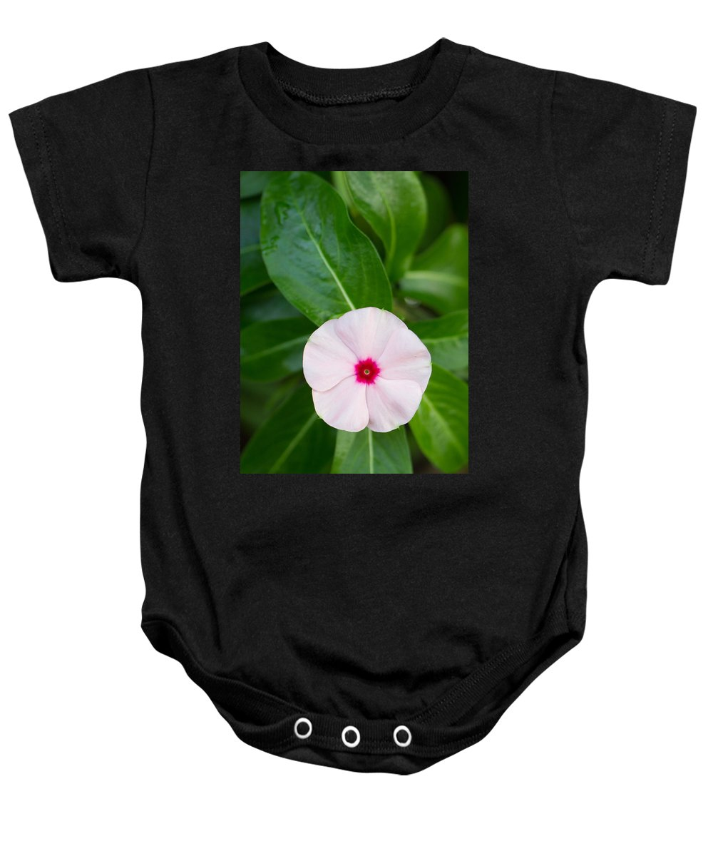 Us Botanic Garden Baby Onesie featuring the photograph Pink Flower by Leah Palmer
