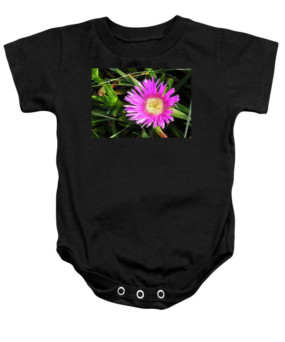 Aizoaceae Baby Onesie featuring the photograph Pink Mesembryanthemum by Taiche Acrylic Art