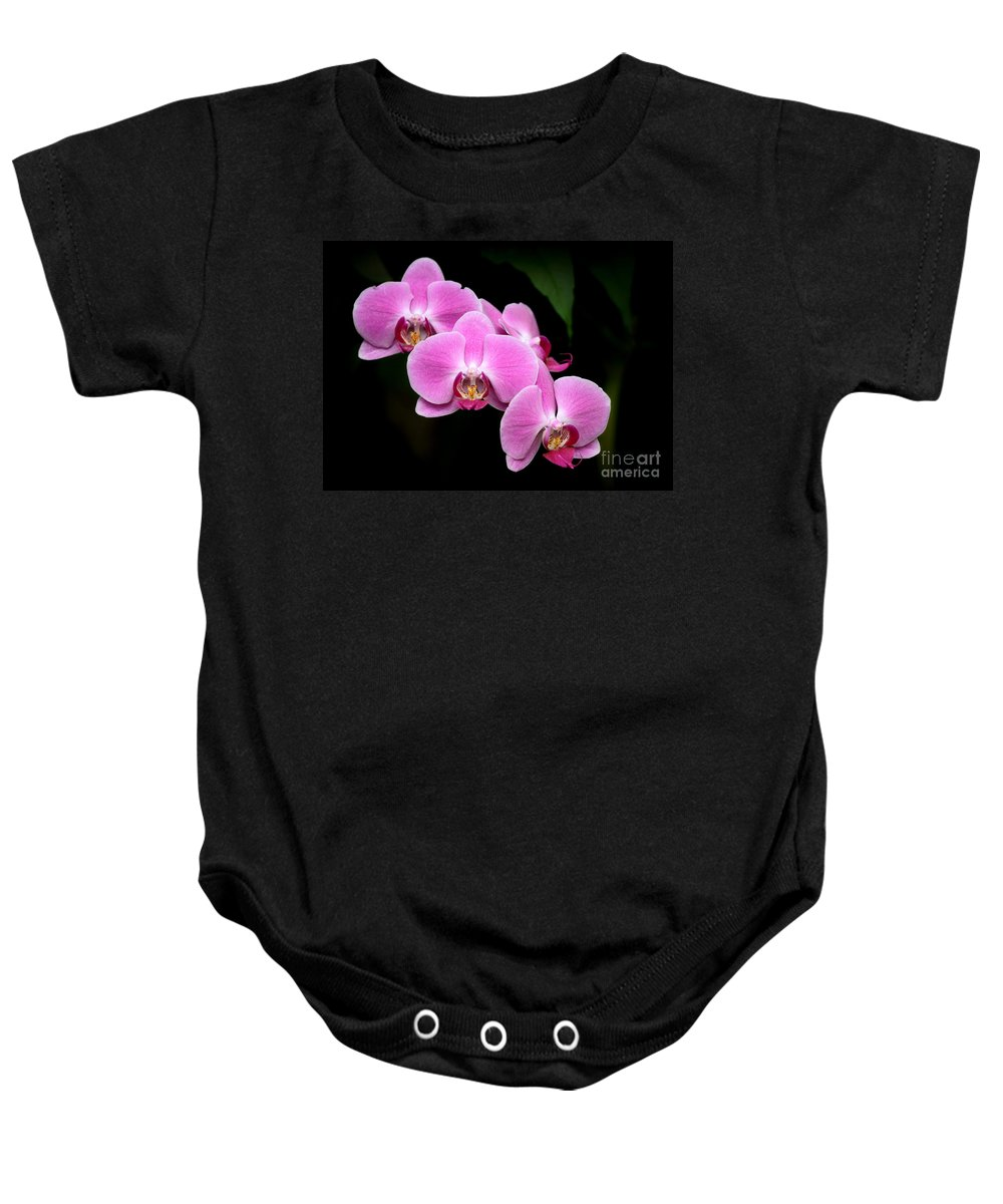 Amazing Baby Onesie featuring the photograph Pink Orchids In A Row by Sabrina L Ryan