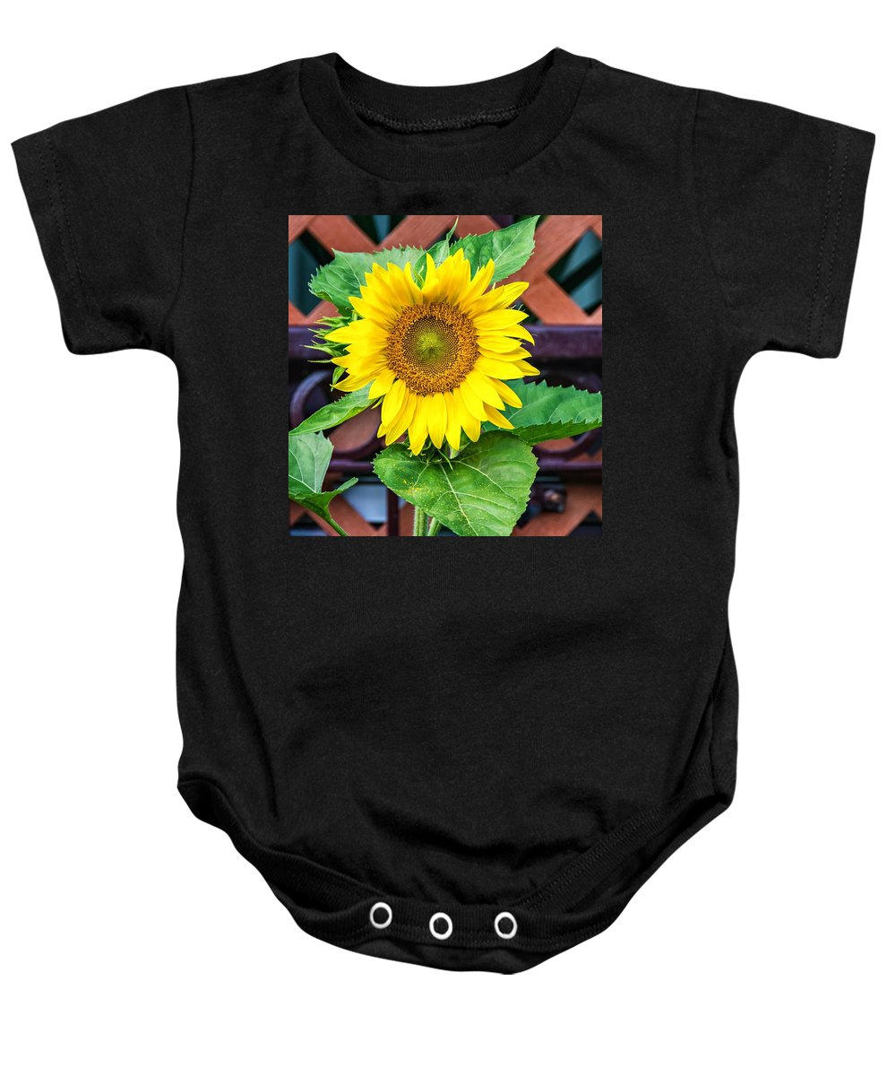 Bolton Baby Onesie featuring the photograph Playful by Steve Harrington