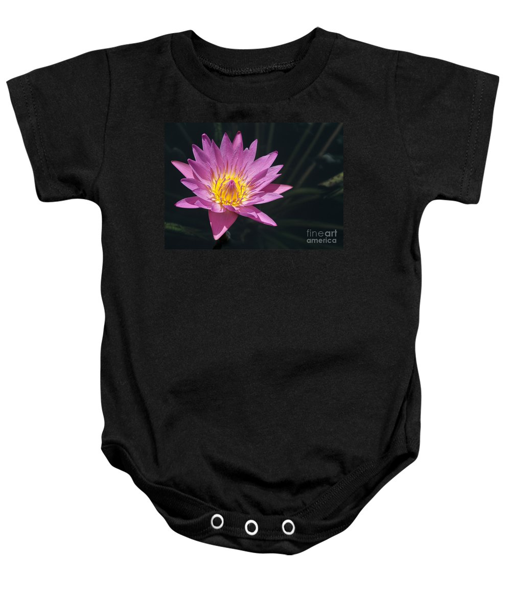 Landscape Baby Onesie featuring the photograph Pretty Pink And Yellow Water Lily by Sabrina L Ryan