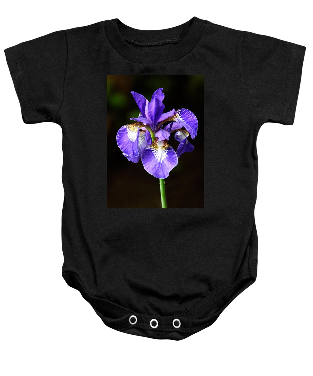 3scape Baby Onesie featuring the photograph Purple Iris by Adam Romanowicz