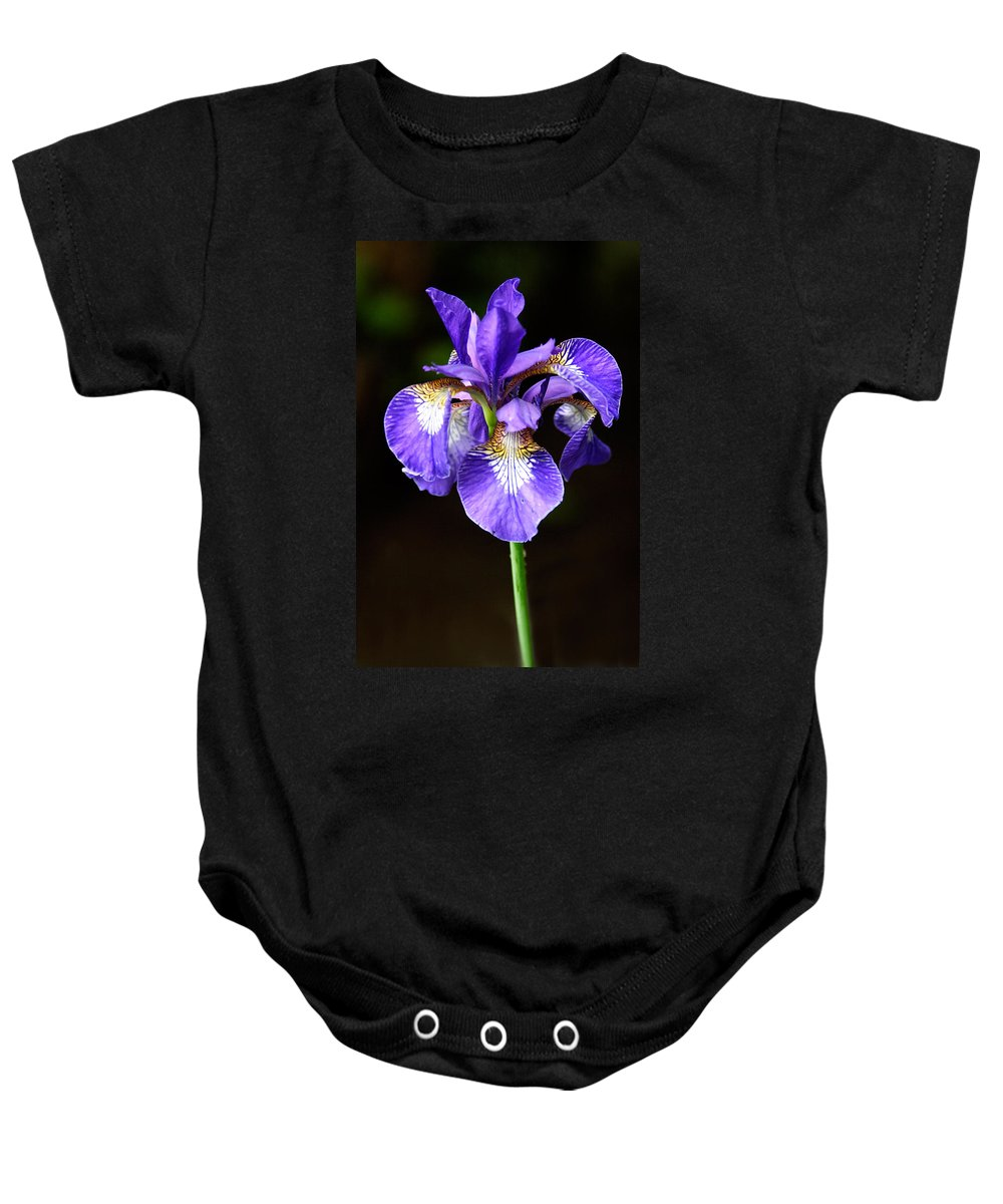 3scape Photos Baby Onesie featuring the photograph Purple Iris by Adam Romanowicz