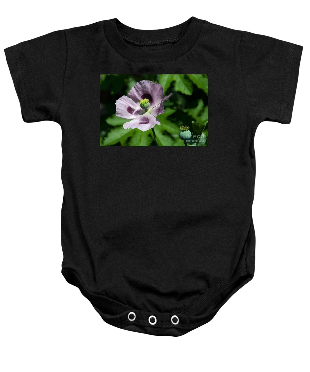 Poppy Baby Onesie featuring the photograph Purple Poppy by Rob Hawkins