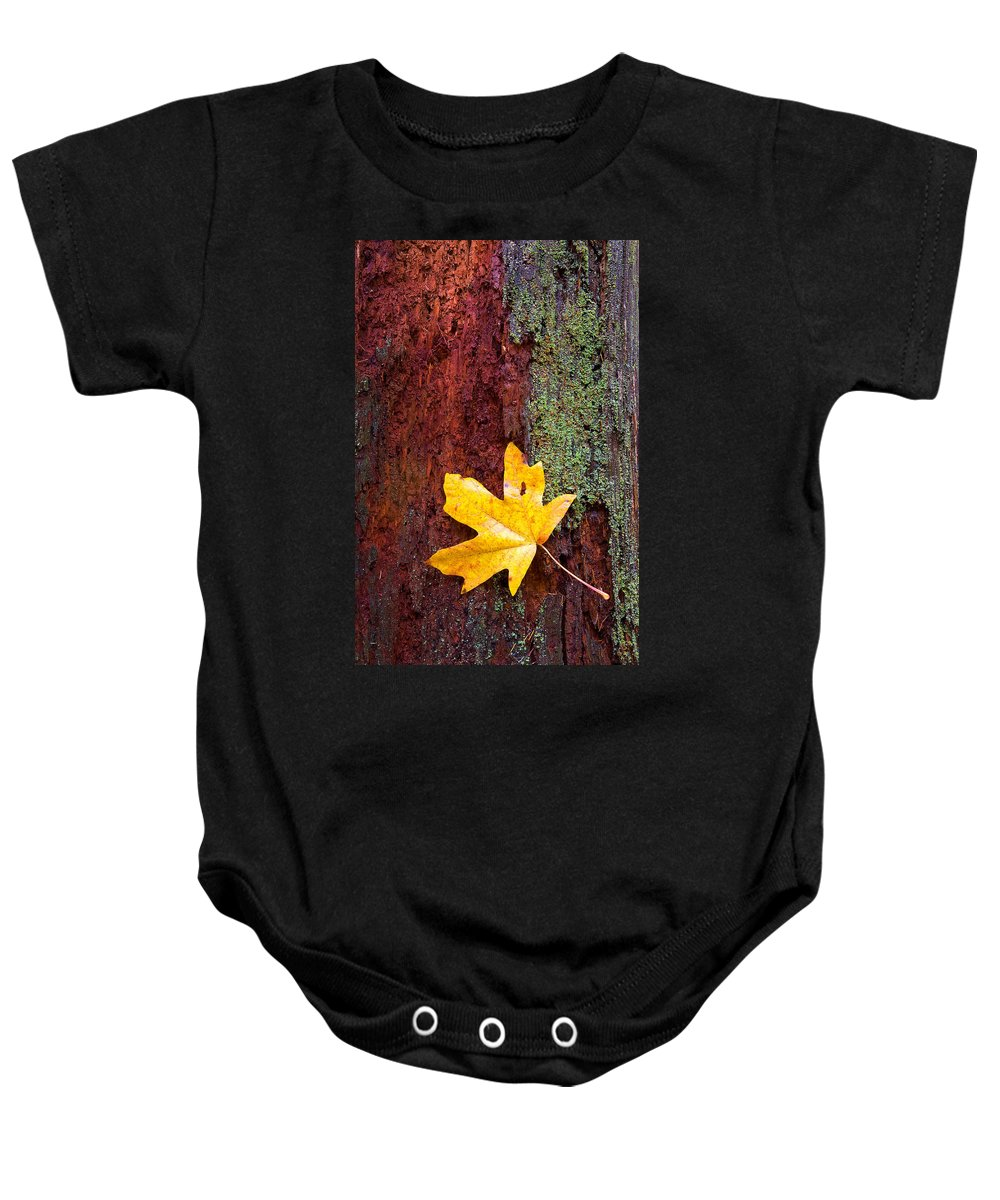 Leaves Baby Onesie featuring the photograph Reclamation by Mike Dawson