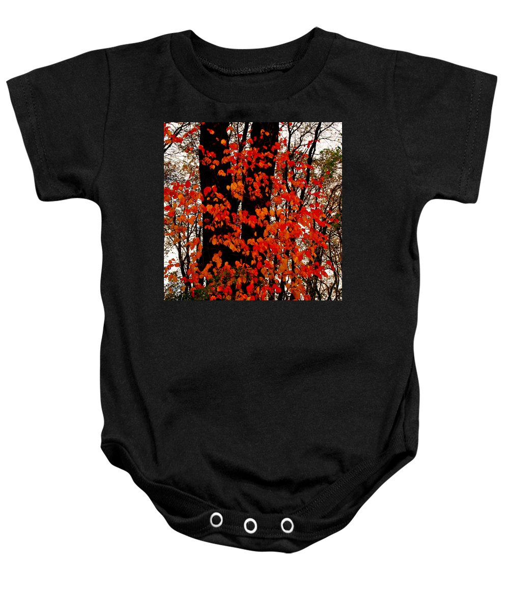 Red Bush Baby Onesie featuring the photograph Red Blaze Burst by Jim Cotton