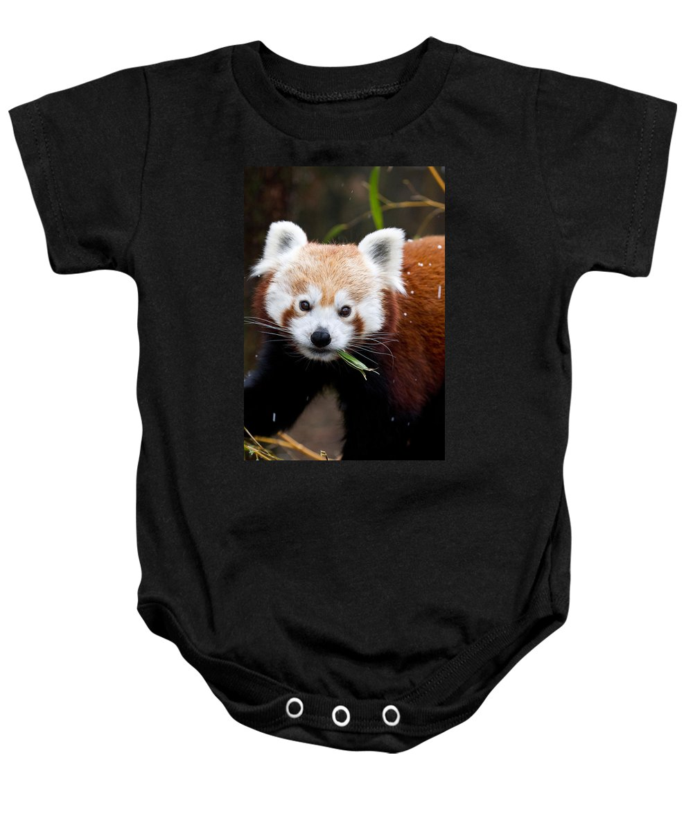 Animal Baby Onesie featuring the photograph Red Panda Ailurus Fulgens Eating by David Kenny