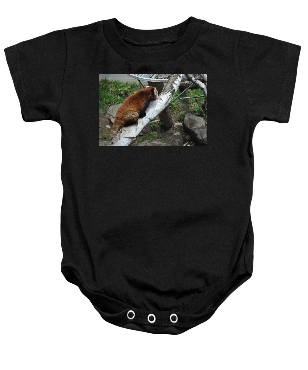 Baby Onesie featuring the photograph Red Panda by Jim Hogg