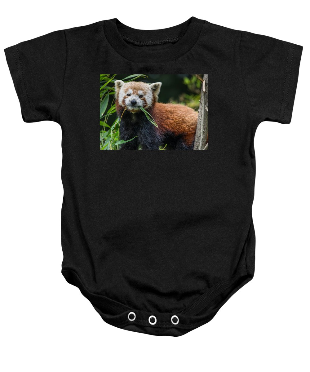 Red Panda Baby Onesie featuring the photograph Red Panda With An Attitude by Greg Nyquist