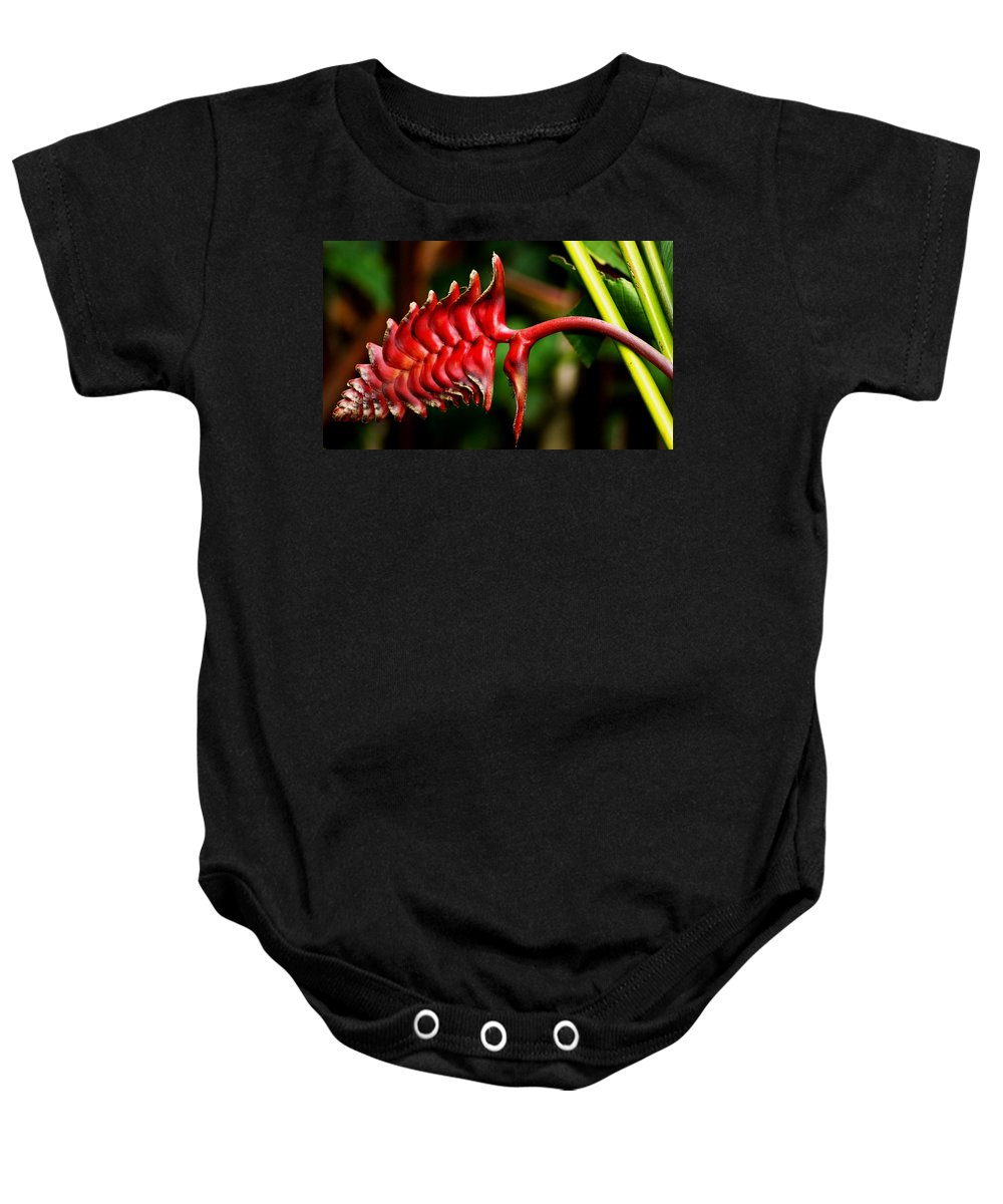 Flower Baby Onesie featuring the photograph Red Scales by Brian Kerls