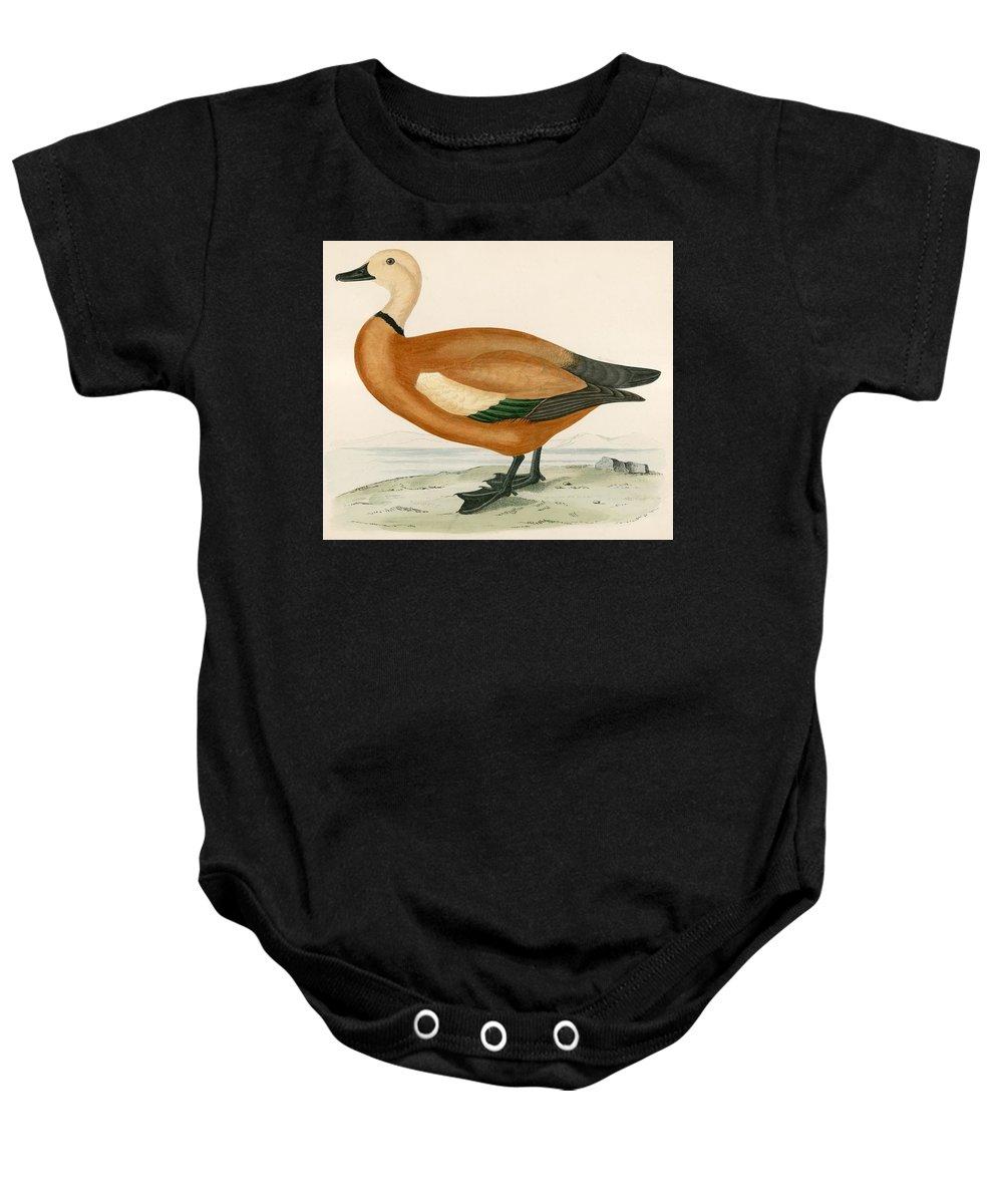 Birds Baby Onesie featuring the painting Ruddy Sheldrake by Beverley R Morris