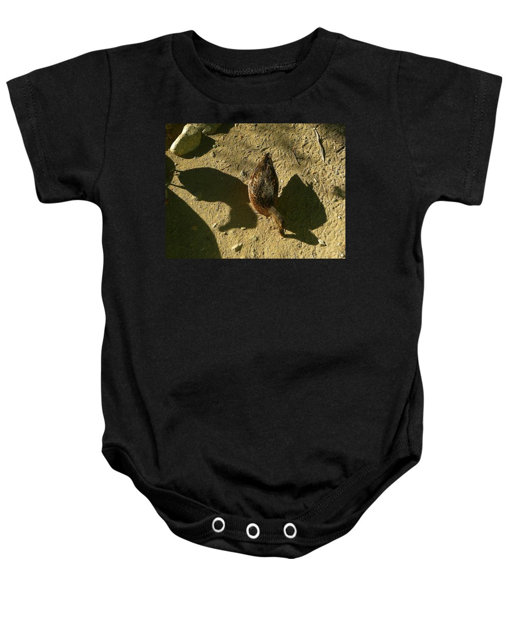 Duck Baby Onesie featuring the photograph Shadows Of A Mallard Duck by Denise Mazzocco