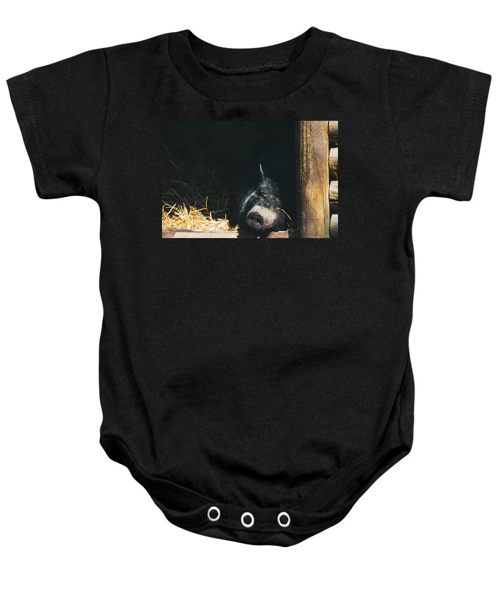 Pig Baby Onesie featuring the photograph Sleeping Potbelly Pig by Pati Photography