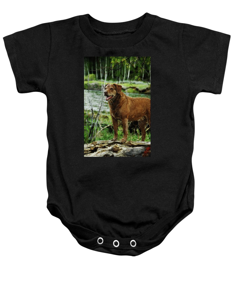 Dog Baby Onesie featuring the photograph Smile Now by Donna Blackhall