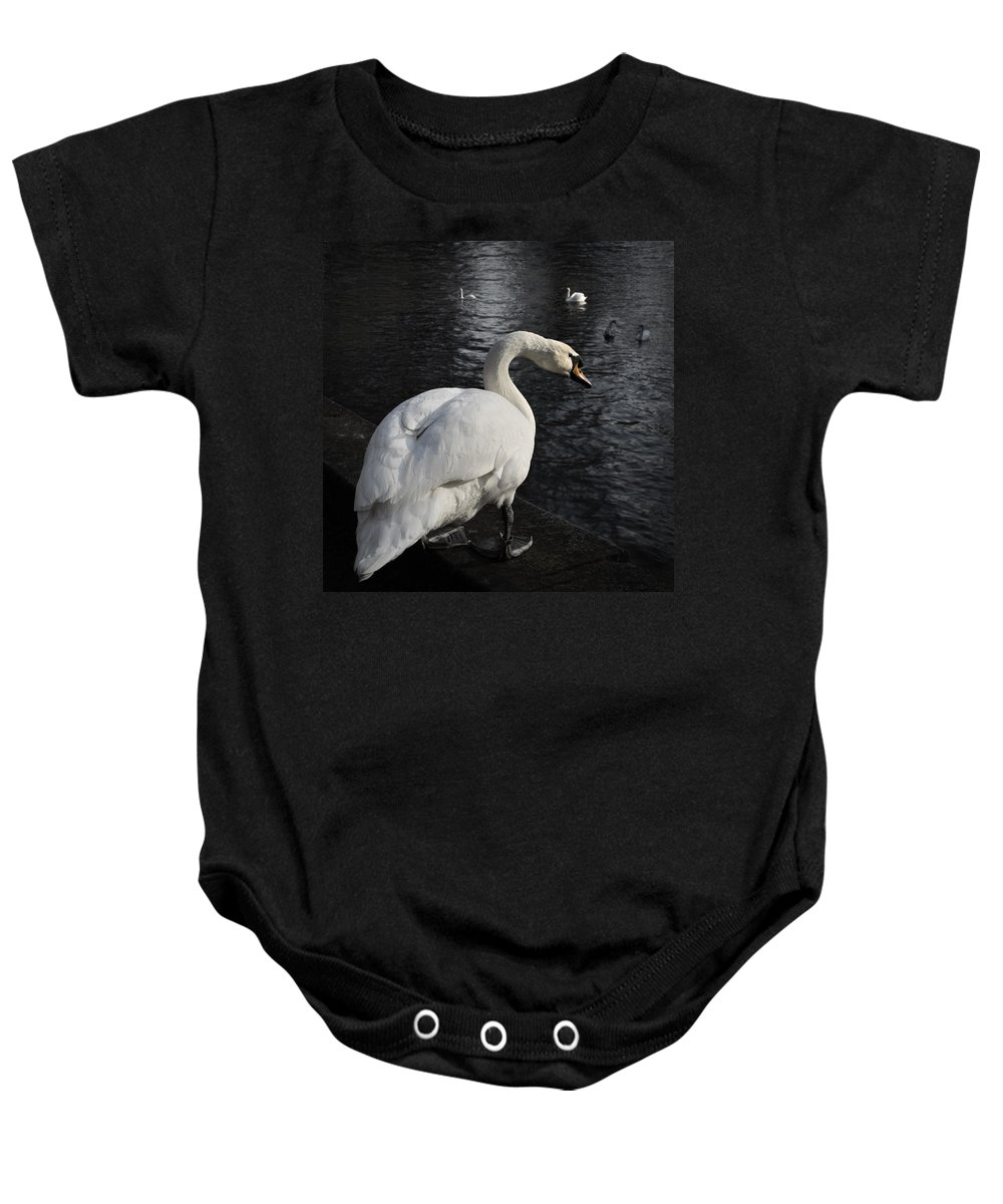 Animal Baby Onesie featuring the photograph Swan by TouTouke A Y