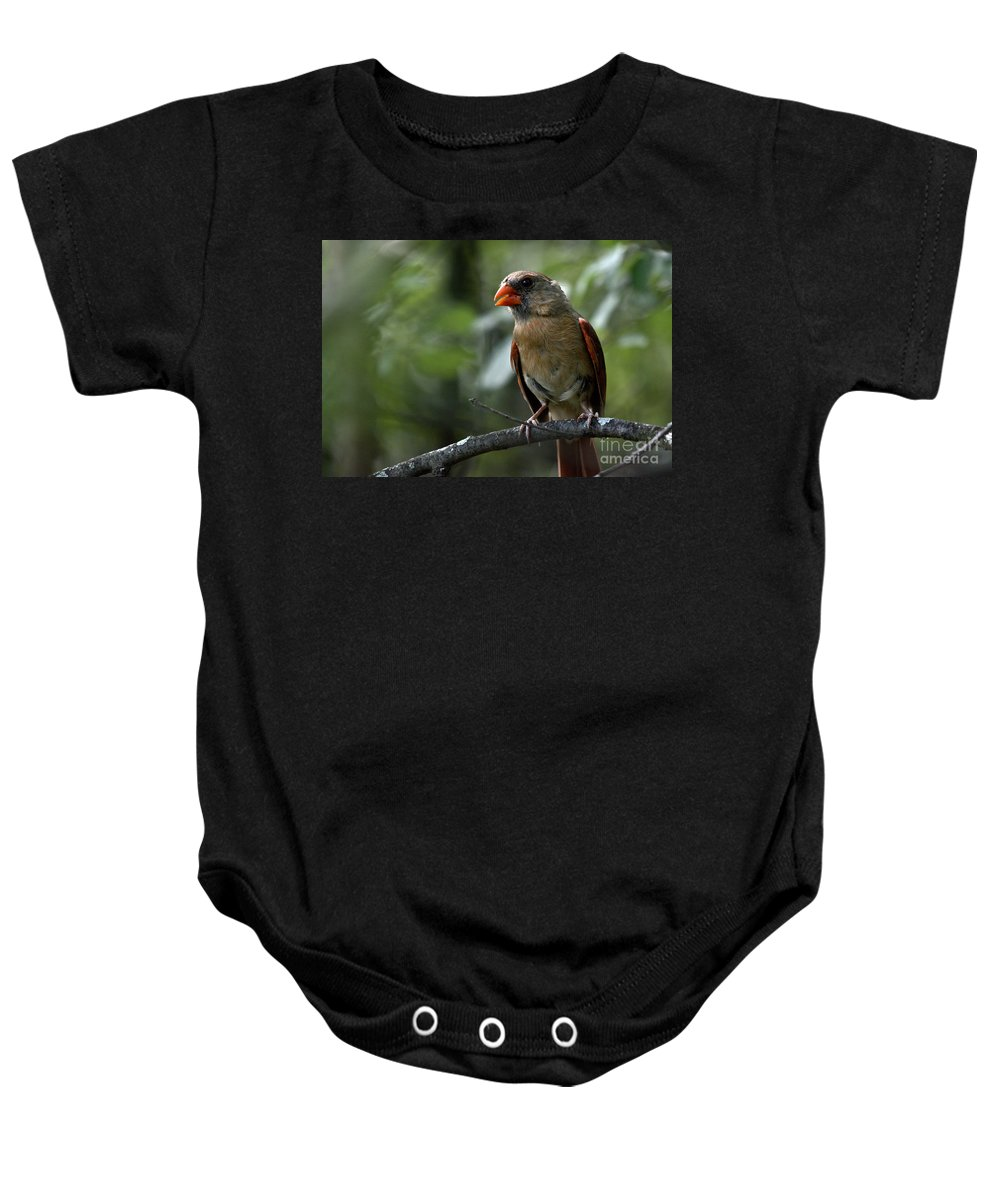 Cardinal Baby Onesie featuring the photograph Sweet Young Cardinal by Cheryl Baxter