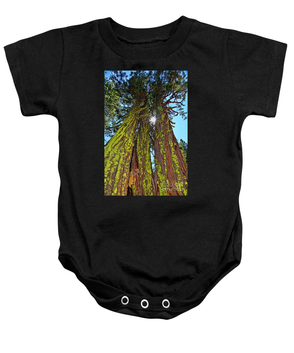 Trees Baby Onesie featuring the photograph Tahoe Trees - Lake Tahoe By Diana Sainz by Diana Raquel Sainz