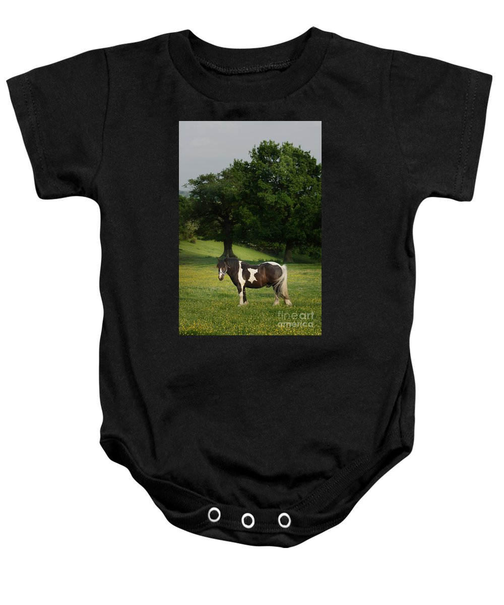 Horse Baby Onesie featuring the photograph The Sunny Meadow by Angel Ciesniarska