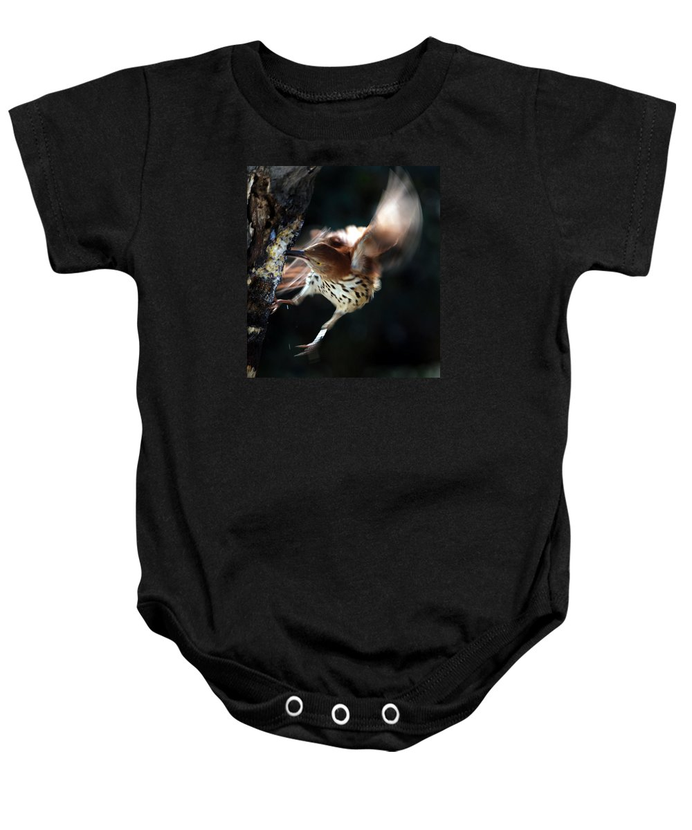 Names Of Birds Baby Onesie featuring the photograph Thrashing Thrasher by Skip Willits