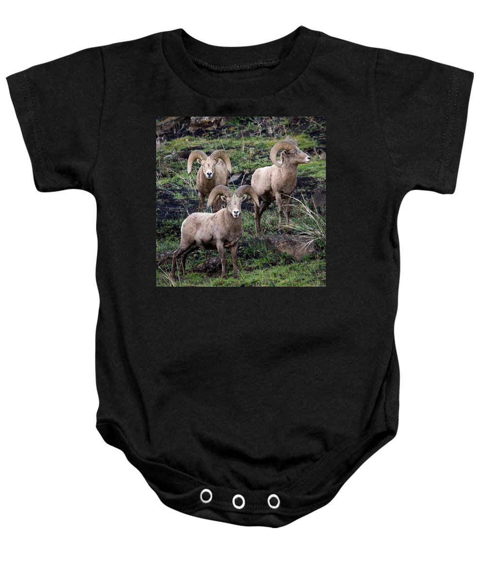 Rams Baby Onesie featuring the photograph Three Rams by Steve McKinzie