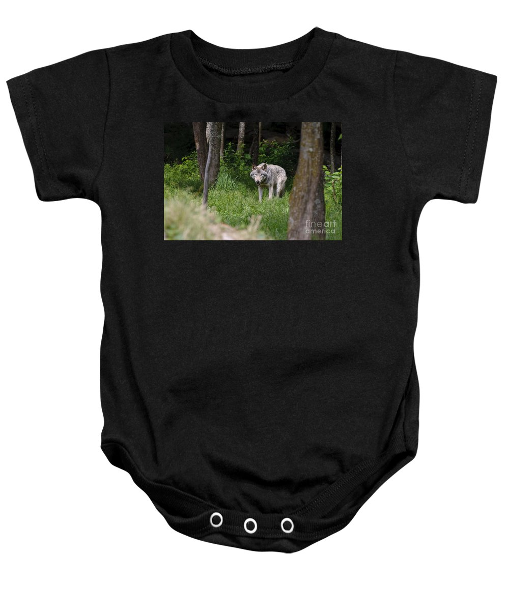Timber Wolf Photography Baby Onesie featuring the photograph Timber Wolf In Forest by Wolves Only