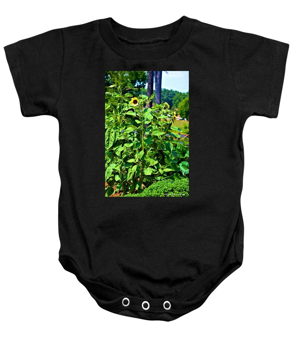 Sunflowers Baby Onesie featuring the photograph Towering Sunflowers by Tara Potts