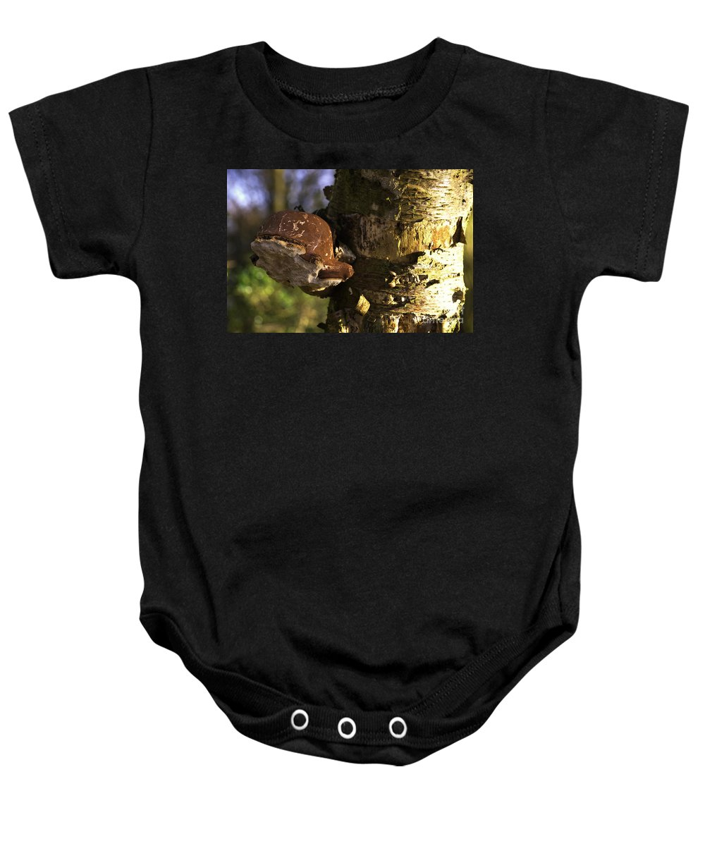 Fungus Baby Onesie featuring the photograph Tree Fungus by Rob Hawkins