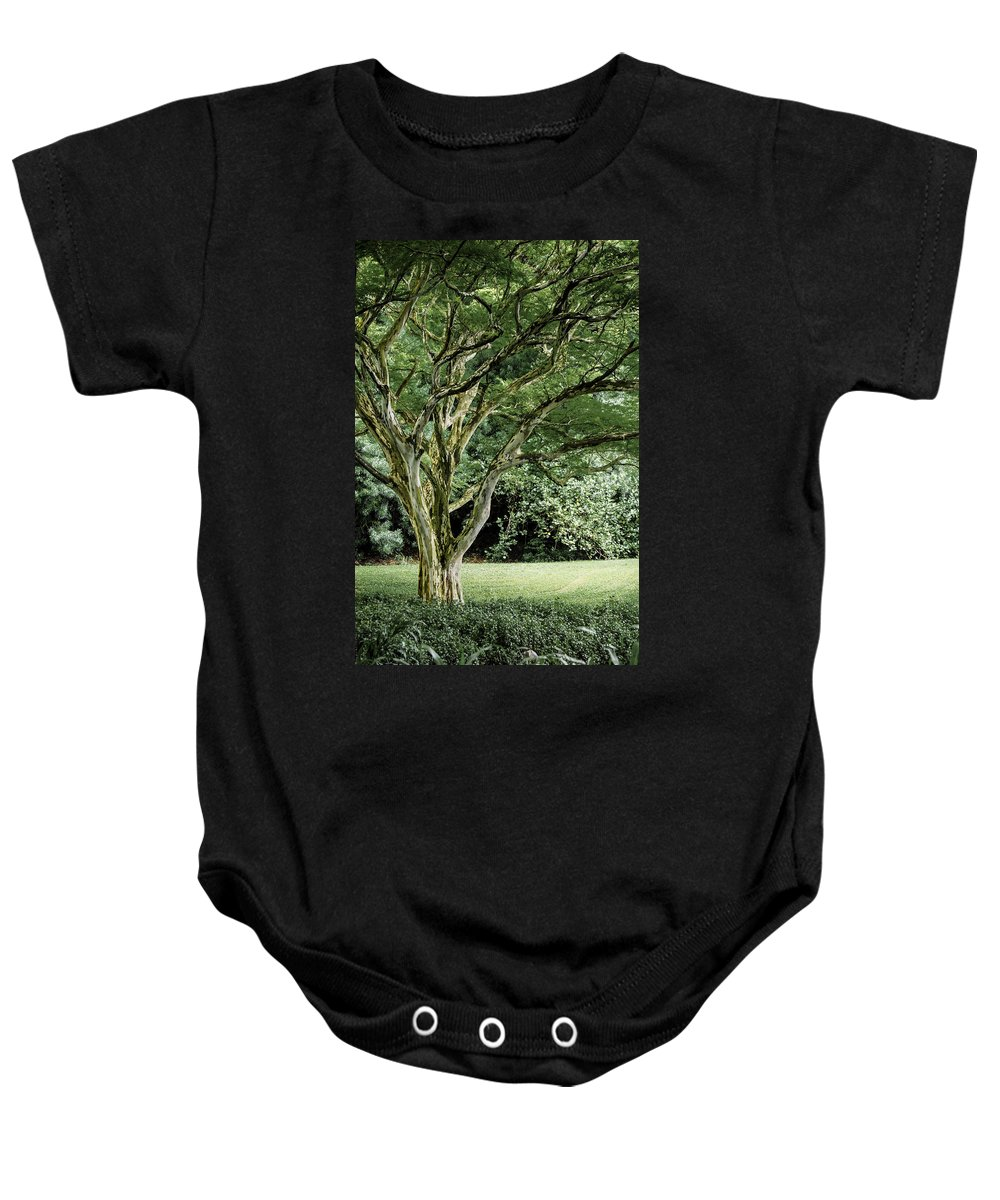 Tree Baby Onesie featuring the photograph Tree Of Life by Debbie Karnes