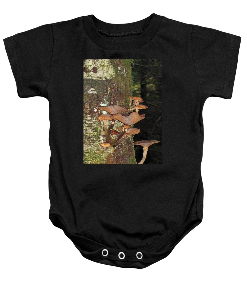 Tree Baby Onesie featuring the photograph Tree With A Fungus by Tikvah's Hope