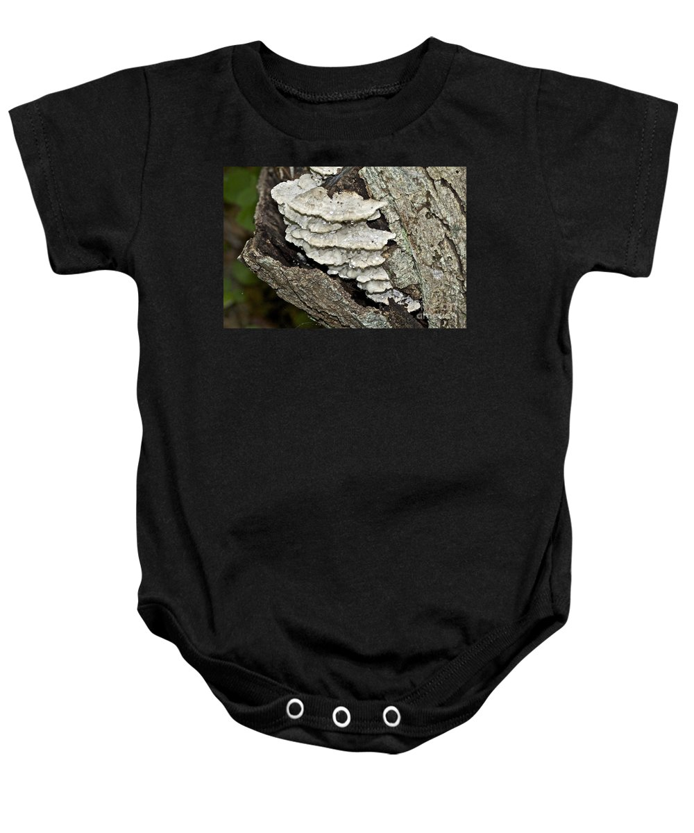 Fungus Baby Onesie featuring the photograph Weep No More My Baby - Bracket Fungi - Tyromyces Balsamea by Mother Nature