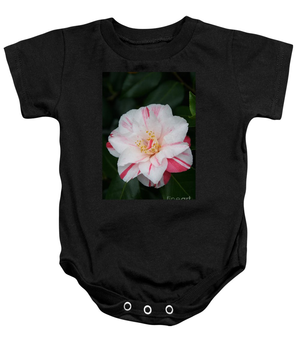 White Camellia Baby Onesie featuring the photograph White With Pink Camellia by Christiane Schulze Art And Photography